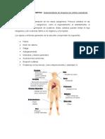 DIAGNOSTICO PRESUNTIVO- VASCULITIS