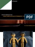 Caracteres sexuale primarios y secundarios ejemplos