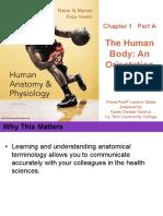 1.1 The Human Body An Orientation