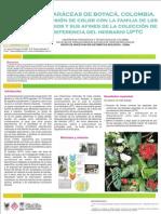Poster Araceae