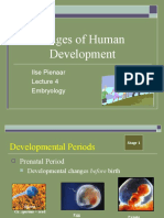 0.Stages of Human Development