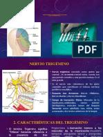 1.3 Nervio Trigémino y su relación con las técnicas de anestesia local (1)