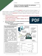 liberation-de-l-energie-emmagasinee-dans-la-matiere-organique-corriges-d-activites-1 (1).pdf