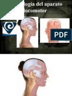 musculos-de-cabeza-cara-y-cuello.pptx