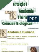 Anatomia 1 - Introdução