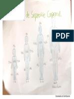 %superficie corporal