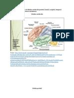 neuropsicologia tarea 2