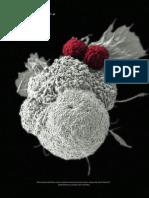 Manipulação genética direciona células de defesa