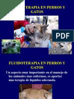 FLUIDOTERAPIA PISA clase pdf.pdf.pdf