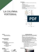 COLUMNA VERTEBRAL.doc
