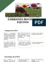 Producción Embriones