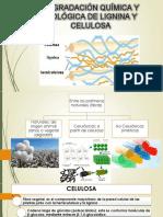 P2.1_DEGRADACIÓN QUÍMICA Y BIOLÓGICA DE LIGNINA Y CELULOSA