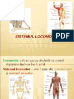 sistemul_locomotor (1)