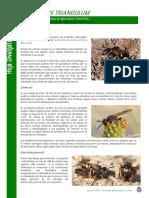 otro_433_apicultura.pdf