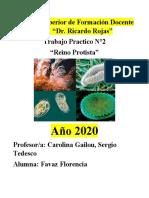reino-protistas-o-protoctistas
