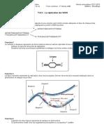 T.D 2 réplication de l'ADN