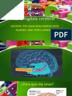 capitulo 3 la amigdala ABEL