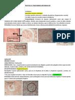 PRACTICAS ANATOPATO.pdf
