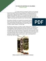 CULTIVO DE FRESA EN SISTEMA DE COLUMNAS.doc