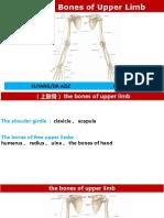 the bones of the upper limb-01