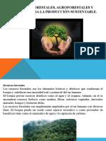 Recursos Forestales T
