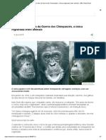 Os motivos por trás da Guerra dos Chimpanzés, a única registrada entre animais - BBC News Brasil