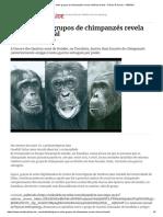 Guerra entre grupos de chimpanzés revela violência brutal - Ciência & Saúde - SÁBADO