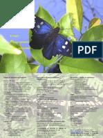 curso_mariposas