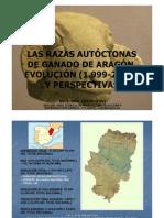 LAS RAZAS AUTÓCTONAS DE GANADO DE ARAGÓN_EVigil