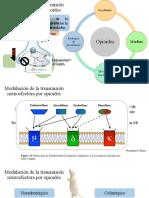 Modulación de la transmisión neuroefectora por opioides