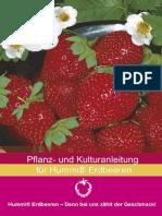 ErdbeerKulturanleitung2009 (1)