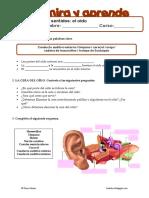 Los sentidos - El oído