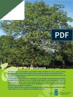 Die_Walnuss.pdf