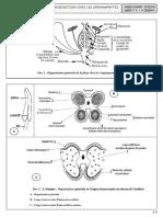 13-support-lecons-18-reproduction-chez-les-spermaphytes