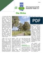 Die_Birke