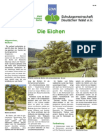 Die_Eiche