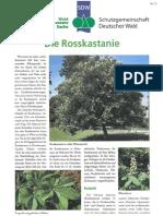 Die_Rosskastanie.pdf