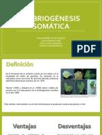 Embriogenesis Som-cultivo.pdf