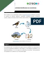 _Plantilla de la actividad Identificamos los ecosistemas (1)
