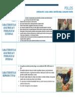 Caracterizacion Anatomica, Fisiologica y Reproductiva de Pollos
