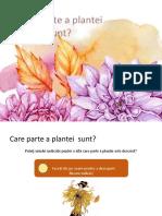 Care parte a plantei sunt- joc interactiv despre partile plantei
