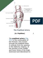 The Popliteal Artery