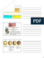 Lipoproteines & Plaque d'Atherome