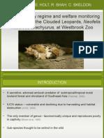 Clouded Leopard FINAL