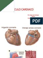 Clase de Musculo Cardiaco