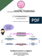 CLASE 2 - CICLO GENITAL FEMENINO