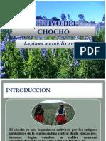 2. CULTIVO DEL CHOCHO (1)