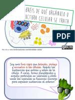 JUEGO de Cartas orgánulos célula 3eso