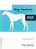 Dog.anatomy.goody 11