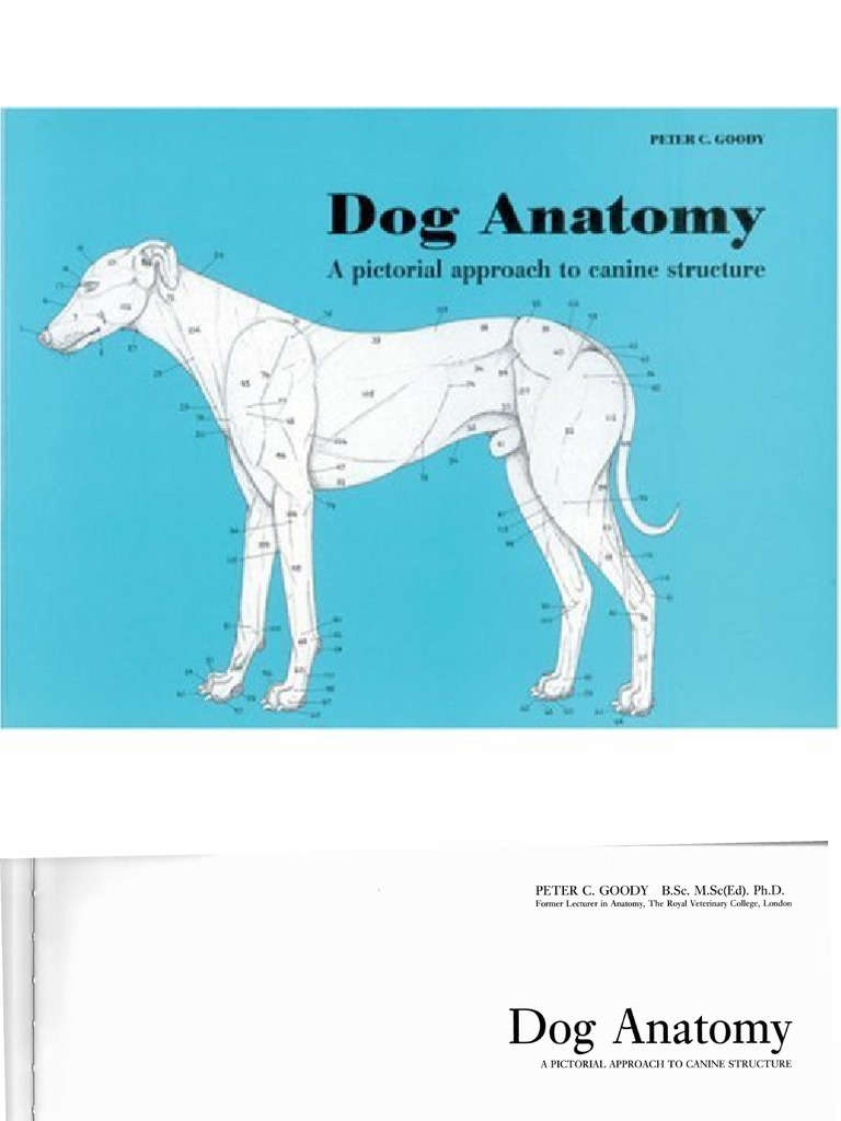 Dog.anatomy.goody 11 | Vertebra | Vertebral Column